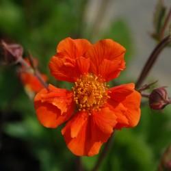 Geum Sea Breeze
